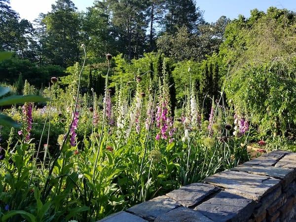 duke gardens spring durham nc