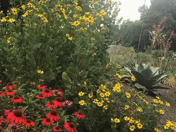juniper level botanic garden flowers