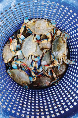 galveston historic travel guide austin katies seafood