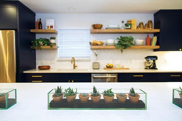 succulent native austin