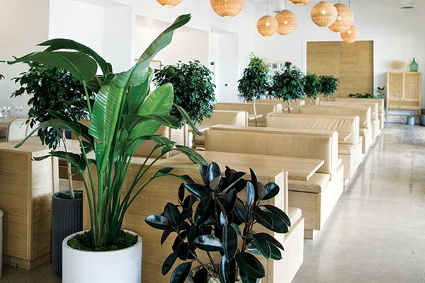 austin, succulents, plant shop