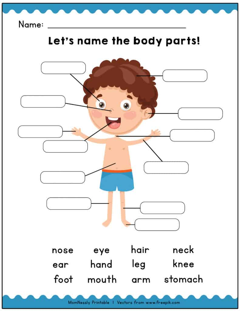 graphic regarding Printable Body Parts referred to as Printable: Locate the System Pieces Understanding Worksheets