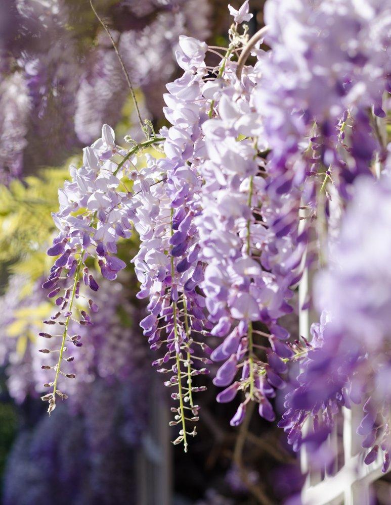 cite florale approche photo marie-16