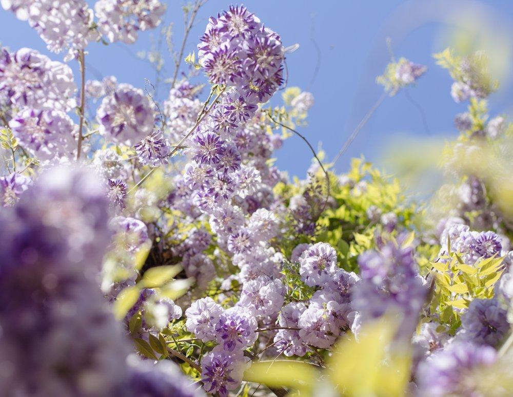cite florale approche photo marie-5
