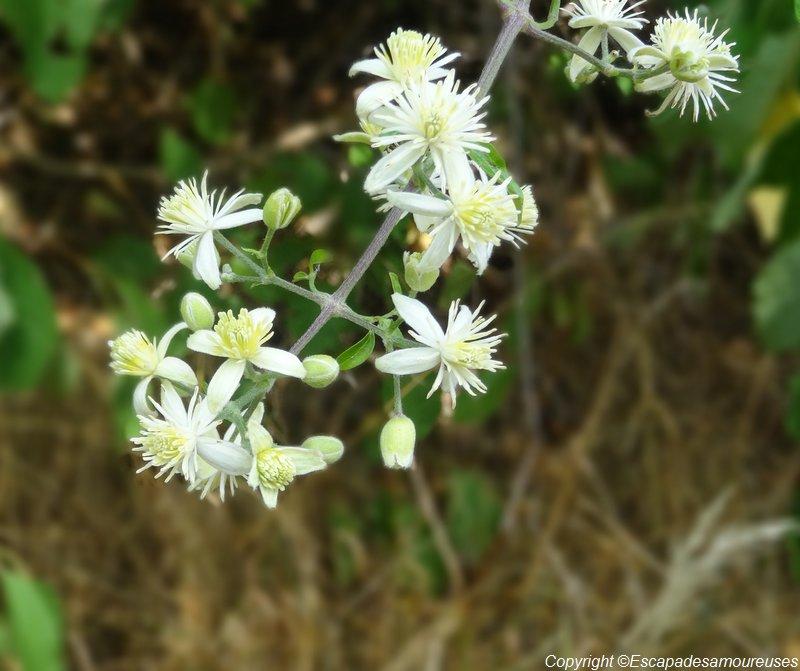 flowerpower22