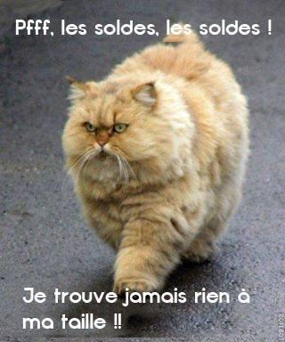 humour-chat-soldes_imagesia-com_9em5