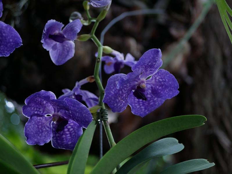 Exposition 1000&1 orchidées jardin des plantes
