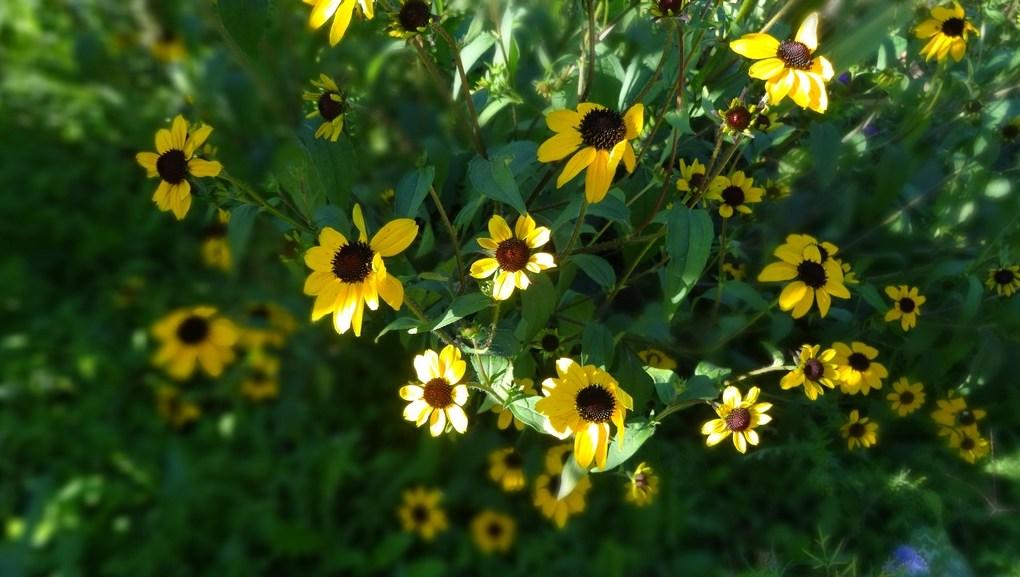 lundi soleil 21 mai jaune lundi fleuri