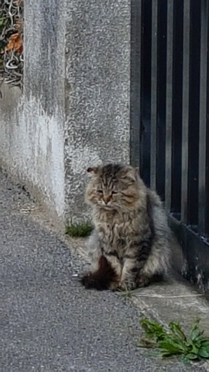 Lundi soleil chats
