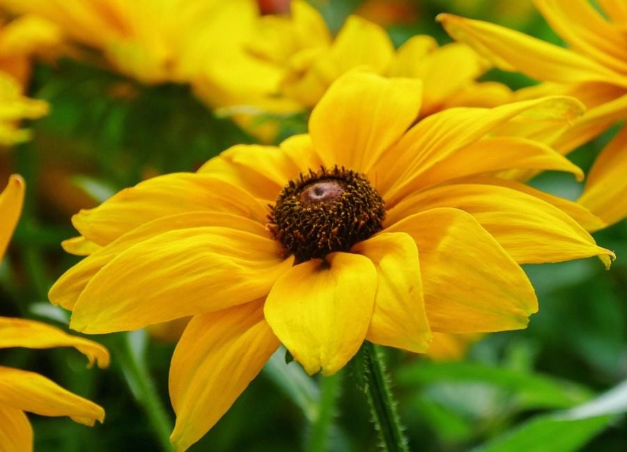 lundi-soleil-mars-jaune-02-fleurs-tribulations-dune-quinqua