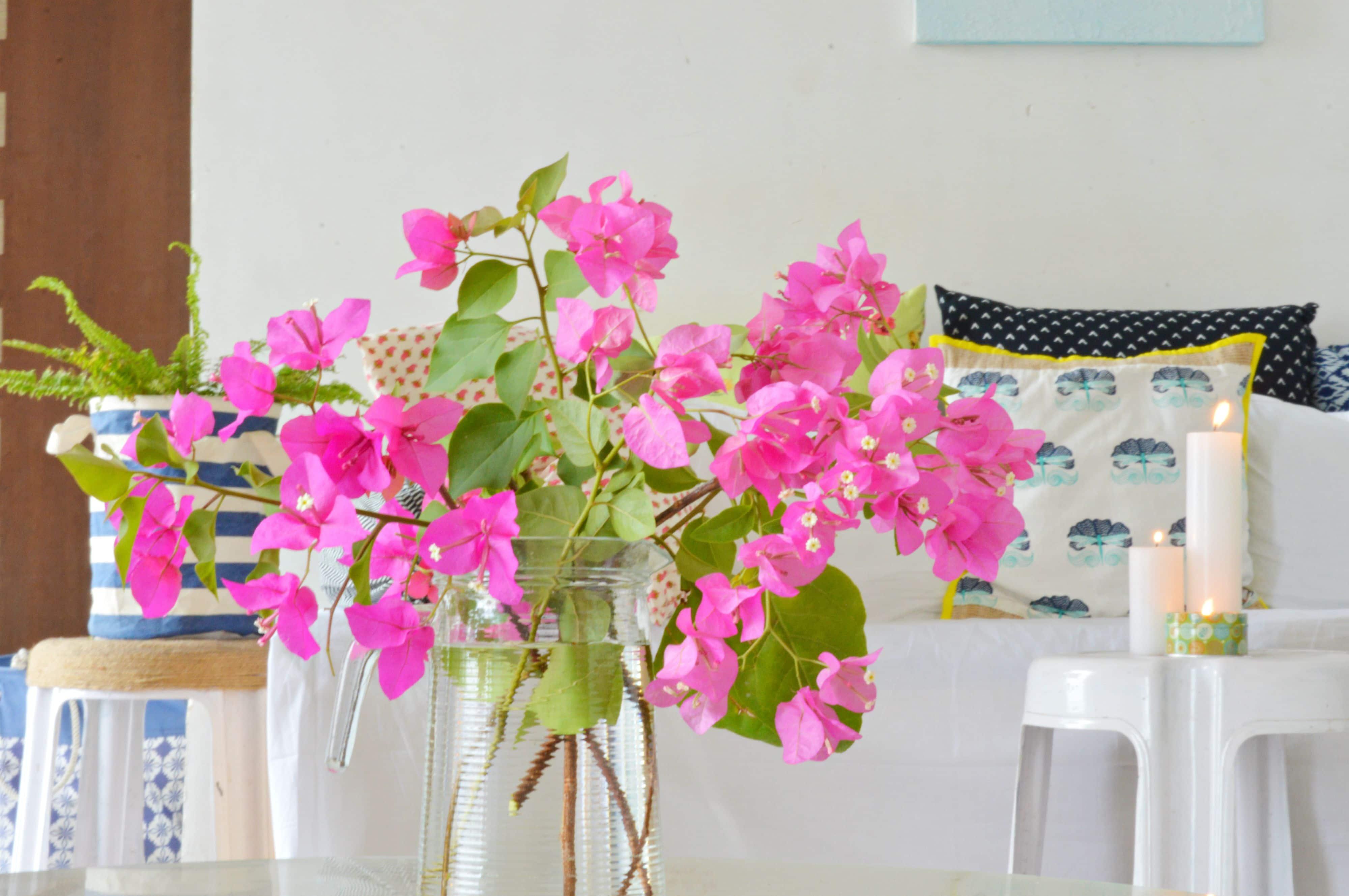 Flori de apartament – sfaturi de îngrijire a celor mai comune plante