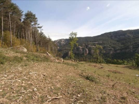 1. Entorn on s'ubica la Cista del Camp de la Bruna (Lladurs), senyalada amb la fletxa blanca. Fotografia: J. M. Espejo Blanco