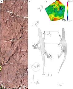 "Esquema de les petjades de dinosaure (icnites) estret de l'article ""An archosauromorph dominated ichnoassemblage in fluvial settings from the late Early Triassic of the Catalan Pyrenees (NE Iberian Peninsula)"""