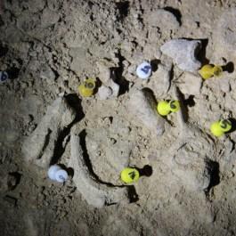 Foto 5. Detall de l'acumulació faunística en un dels quadres de la Cova dels Tritons.