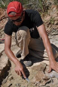 Figura 6. Extracció d'un fèmur complet del rinoceront Dromoceratherium mirallesi recuperat al jaciment de les Cases de la Valenciana durant la campanya de 2012. Fotografia: I. Casanovas-Vilar.