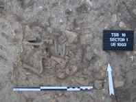 Detall de sacrifici d'ovella o cabra del segle VII identicat per sota de nivell de paviment del sondeig 1.