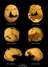 Crani pertanyent a les restes humanes trobades a la Cova Mollet III (Serinyà, Pla de l'Estany)