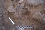 Jaciment de la Ferradura. Material ceràmic in situ procedent de l'àmbit 6