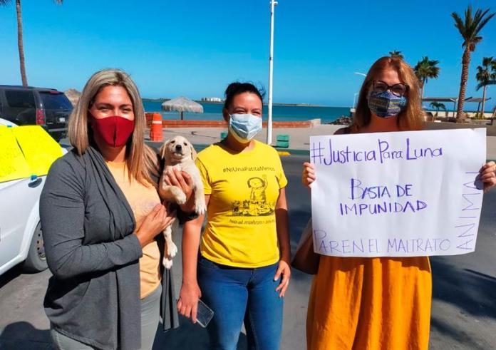 Paceños piden justicia para la perrita Luna en Los Cabos - Tribuna de los  Cabos