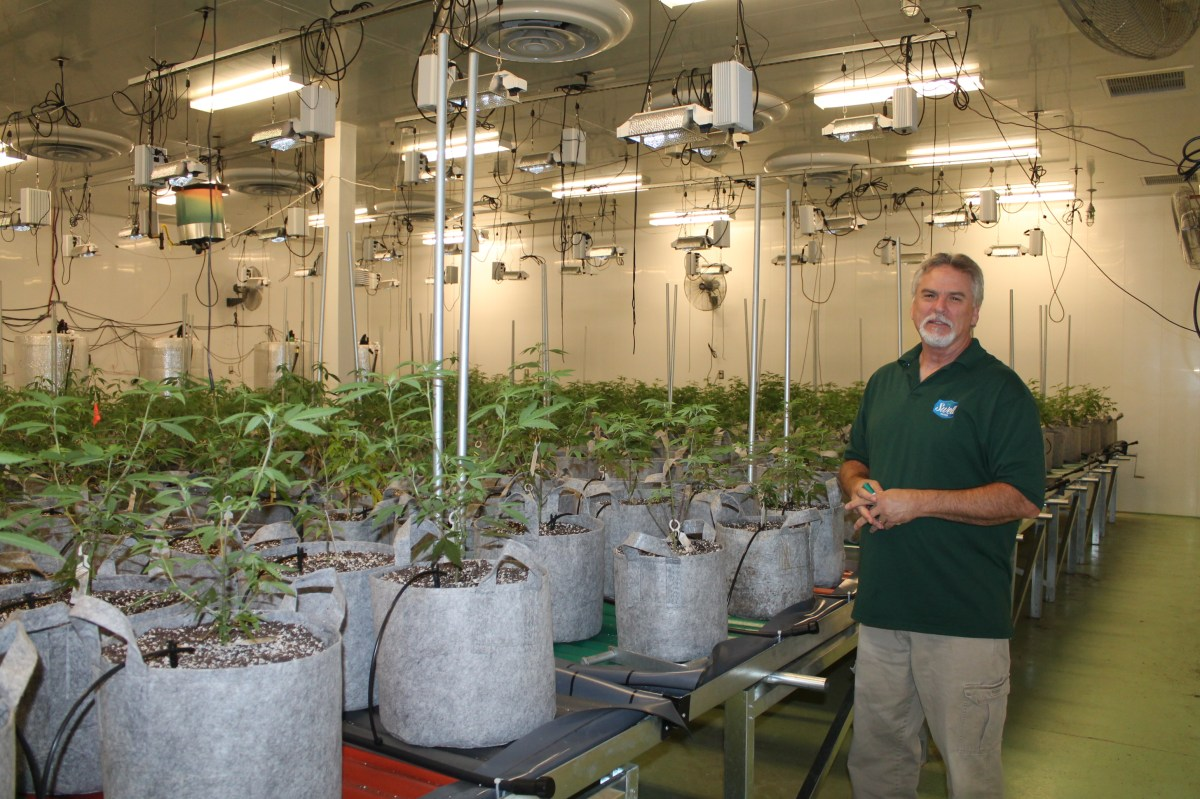 Swell Farmacy works to set the standard for cannabis growing