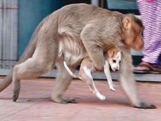 monkey-and-dog-relationship