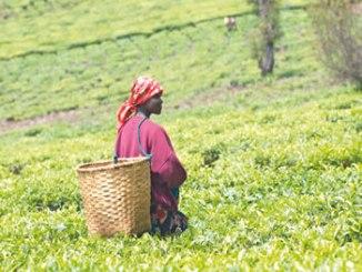 africa-agribusiness2