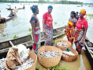 fish-production-farming