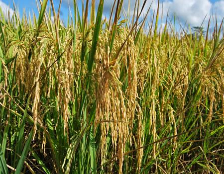 Benin Republic seeks Nigeria's help, food sufficiency, rice, GiZ