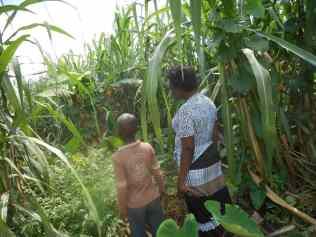 Elisa, Caleb, and Fraha help their mother with a small farm.
