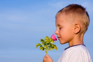 3 years old boy smelling rose flower in spring day.