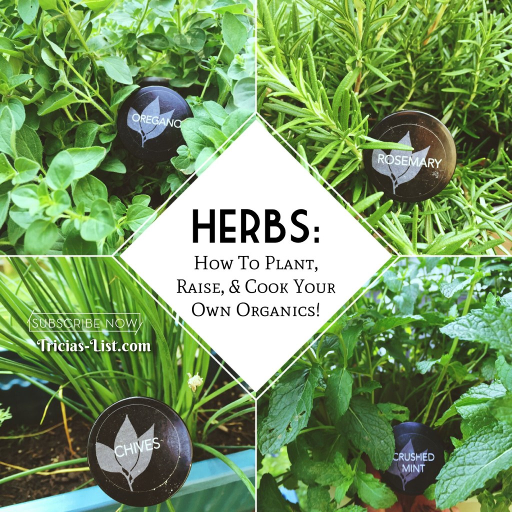 Herbs: How To Plant, Raise, & Cook Your Own Organics! (Pt 1)