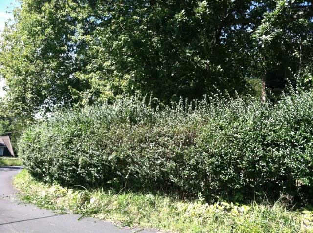 before hedge 1