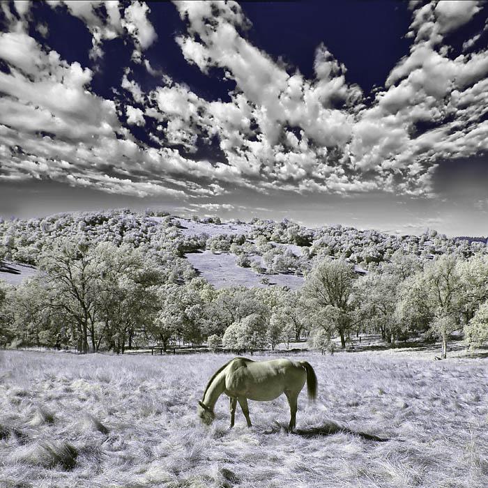 Digital Infrared IR Photography