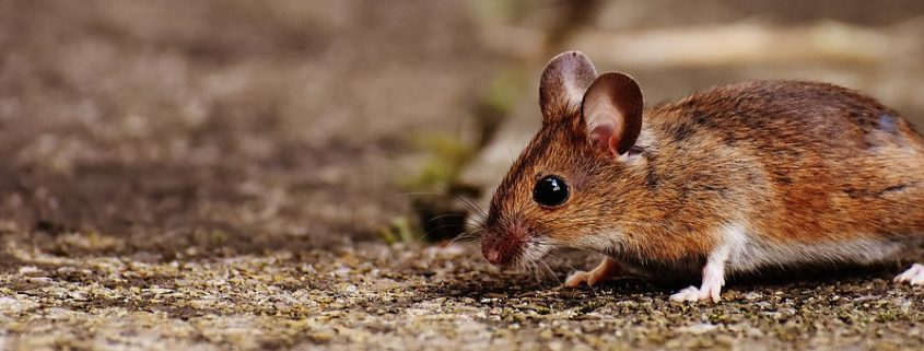 Hantavirus, what you should know - Tri County Health