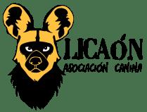 Licaon