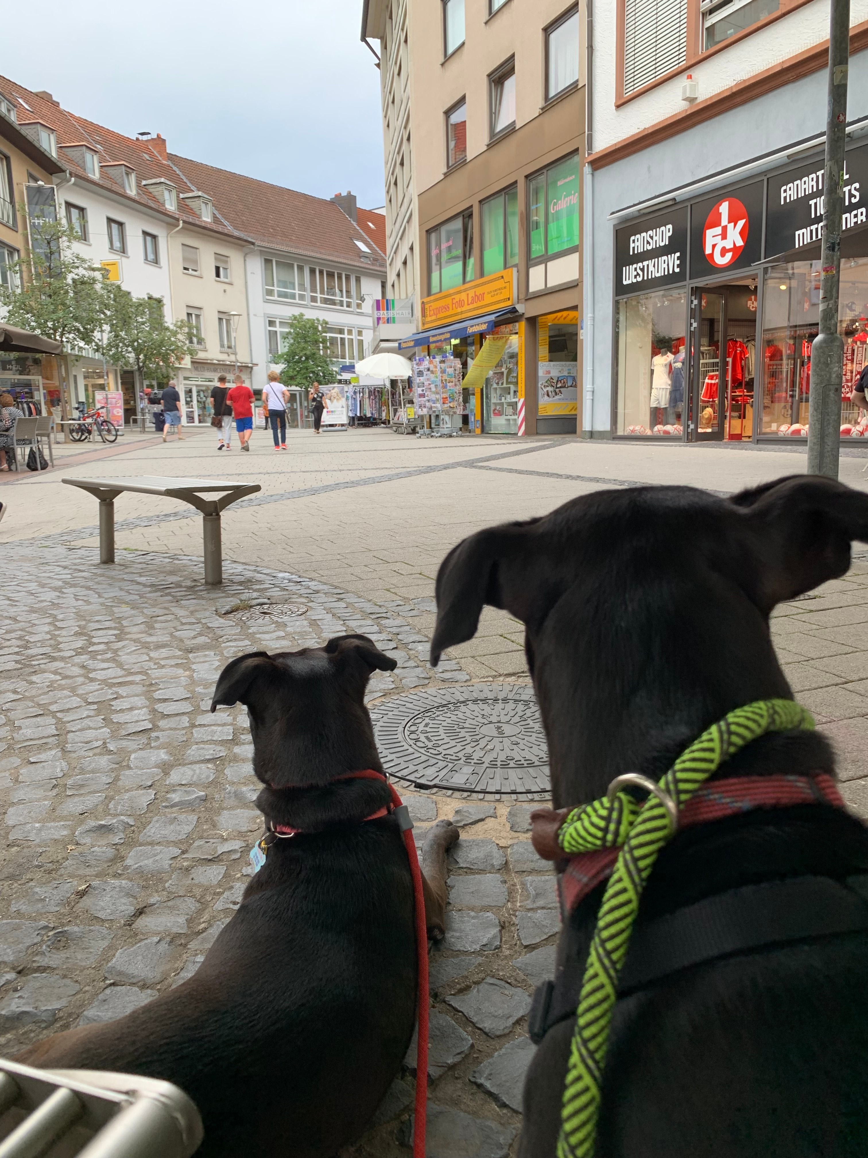 Our dogs enjoying people watching in Germany