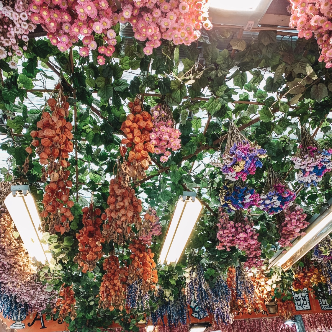 Things to do in Amsterdam - go to the floating flower market