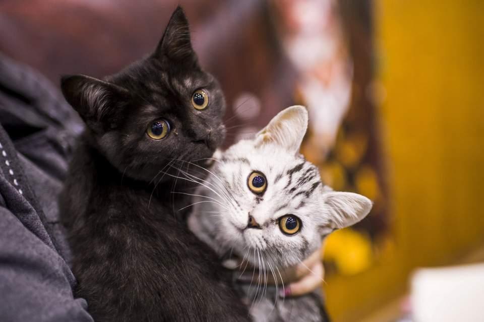 ecb6f8f12d4e Η επιστήμη μίλησε  Οι γάτες μπορούν να αναγνωρίσουν το όνομά τους ...