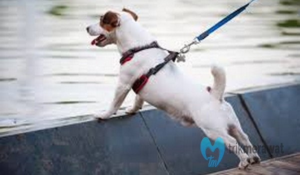Anjing Hiperaktif