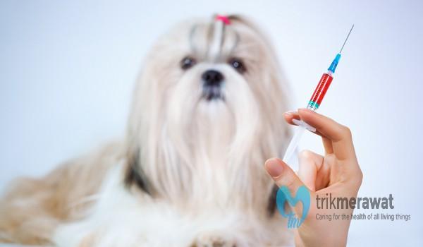 Vaksinasi Anak Anjing
