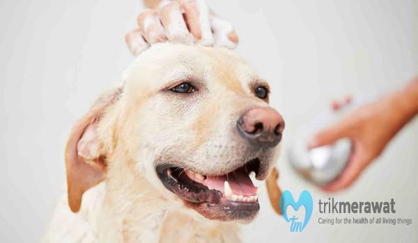 grooming anjing