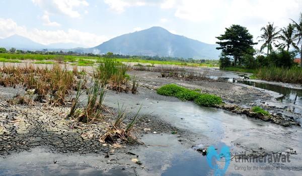 contoh limbah pertanian