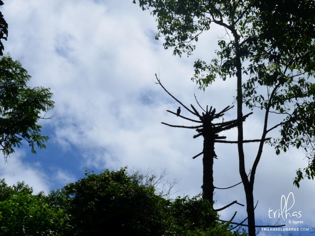 Parque ecológico goioere