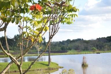 Pesqueiro do Lago - Campina da lagoa