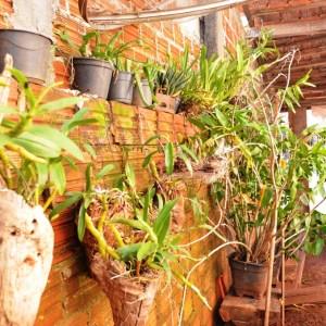 Orquídeas em Janiópolis