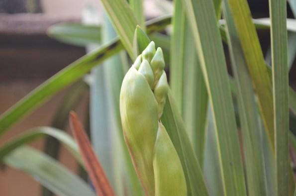 Orquídeas em Janiópolis - Vera