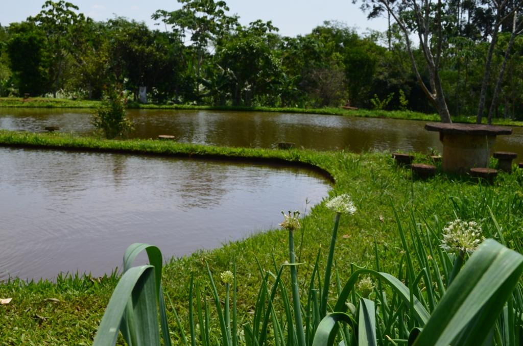 Onde pescar na região de Campo Mourão?