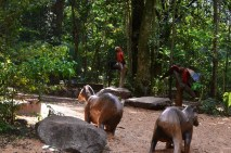 Parque do Ingá - Maringá