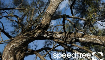 Speedtree 8 For Games