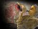 Ce coquillage fait résonner des sons vieux de 18 000 ans